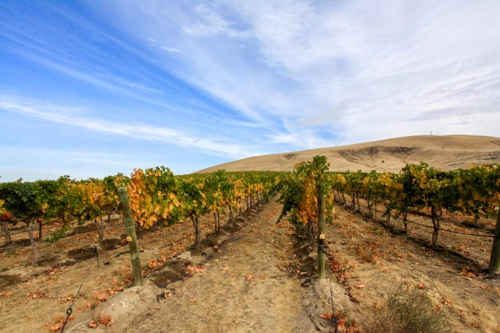 Cabernet Sauvignon vineyard is Yakima, a sub AVA of the Columbia Valley