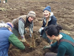 Digging up a scotchbroom root, and being real excited about it!