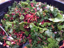 Winter salad of kale, spinach, lettuce, parsley, beet, carrot, leek! Straight from our garden to your tummy.