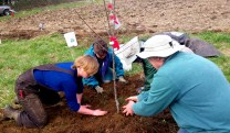 A team effort: Camille, Stoni, Jenny, and Reed making sure this young tree is straight and secure.