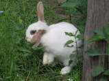I took this picture of a bunny at Fondo Valle especially for our niece, Elizabeth. Ciao E!!