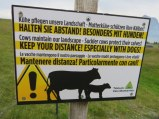 "Warning about maternal cows. Not too sure about the choice of English as ""suckler cows."""