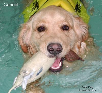 Good Dog Aquatic