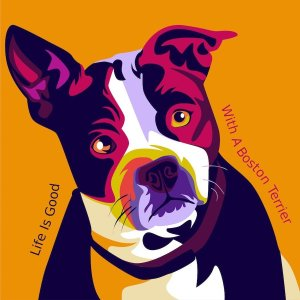 custom boston terrier artwork dog portrait with pop art style