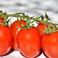 tomatoes, trusses, bush tomatoes