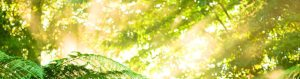 Adult Children of Alcoholics Symptoms: Sunlight streaming through forest on to a fern