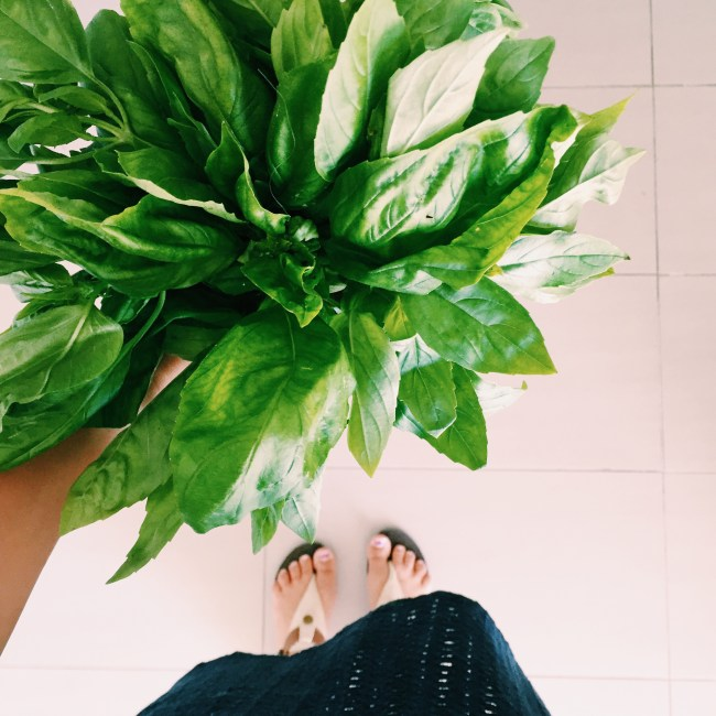 A giant bunch of basil from the farmer's market