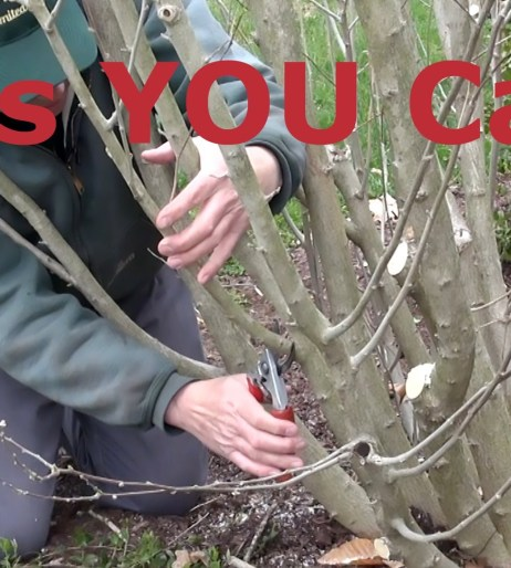 Video Category Pruning
