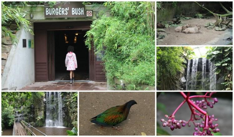 Burgers Bush-Dagje naar de Burgers Zoo- leuke zomeruitjes-uitstapjes in Nederland-GoodGirlsCompany-Mamachallenge zomereditie 2015