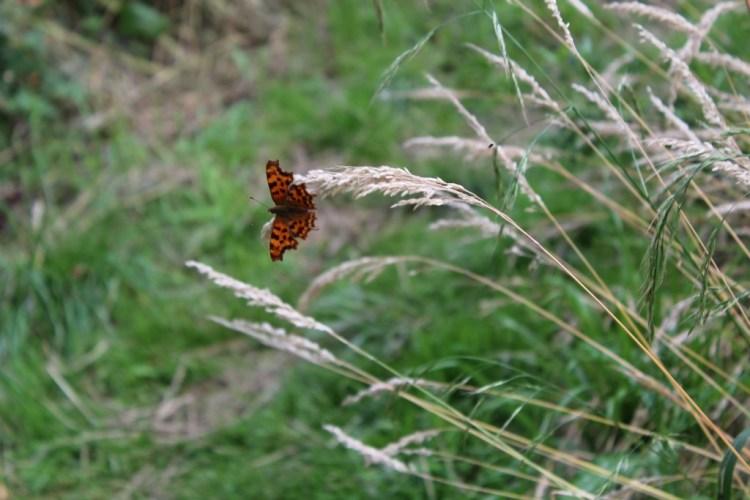 Speelbos Schuytgraaf-Flora en fauna in de stad