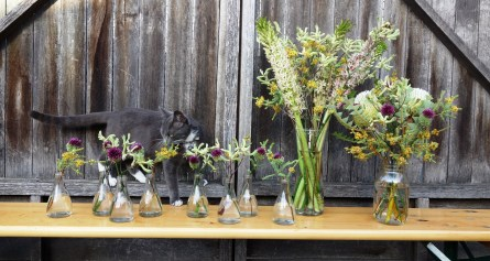 Spook with allium, kangaroo paw, banksia & pineapple lilies in glass jars