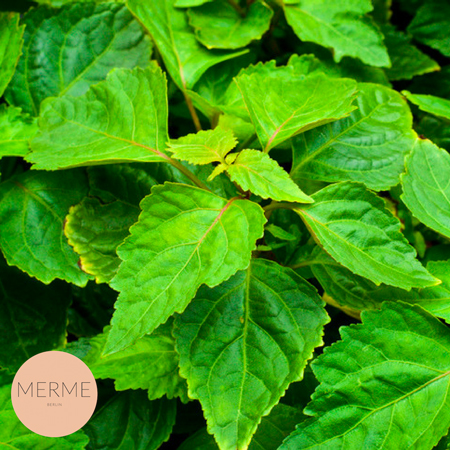 Merme_clear-skin-booster_patchouli_goodhabits_2