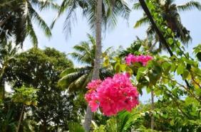 jungle-paradise-resort-hikkaduwa-sri-lanka-1