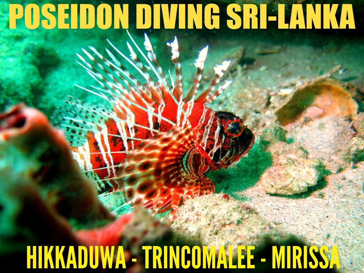 Poseidon Diving Station Sri Lanka