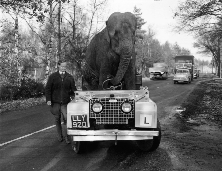 "Lou Marvin ""The Smoking Elephant"""