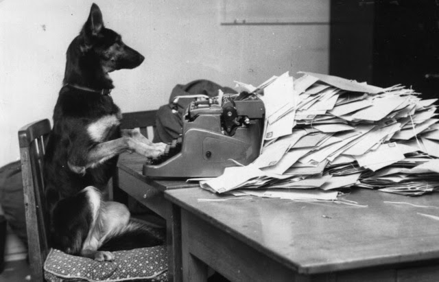 dog typewriter
