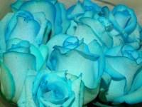 青いバラの花言葉を添えた花束で「夢叶う」を実現させる!