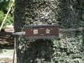 新宿御苑の八重桜の見頃と種類は!黄色と緑の桜「鬱金」「御衣黄」はこんな色!