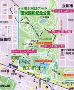 昭和記念公園コスモス