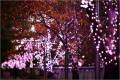 大崎の目黒川イルミネーションの期間は!冬の桜でグッドデザイン賞とは