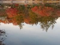 昭和記念公園の紅葉の現在12月の逆さモミジが超美しい!感動の画像!