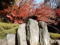 小石川後楽園の紅葉2018の見頃は&しだれ桜や藤、花菖蒲の開花時期は