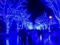 青の洞窟 渋谷の場所と時間 アクセスは原宿からがおすすめ!