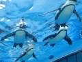 サンシャイン水族館のペンギンが空を飛ぶ!に思わずニッコリ