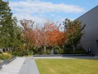 銀座シックスの屋上庭園の紅葉と十月桜の見頃