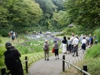 明治神宮の花菖蒲 2019の開花状況と写真で見る「宇宙」は!