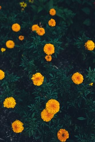 Eight Gardening Ideas for Spring
