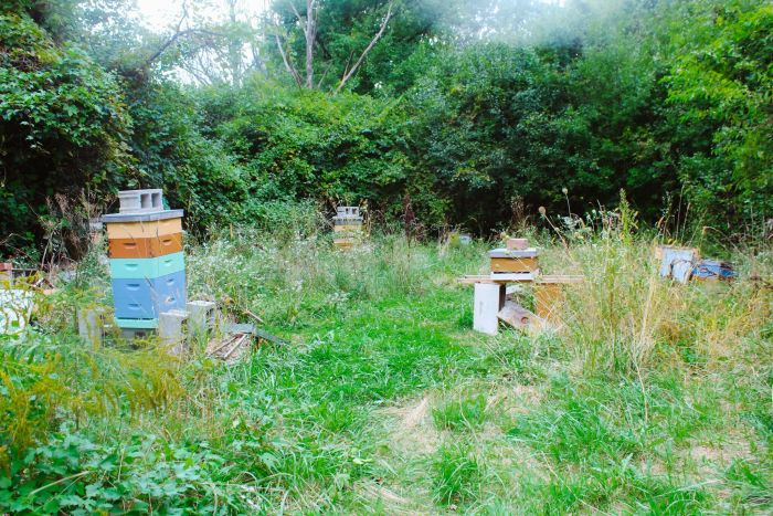 Bee Keeping D-Town Farm
