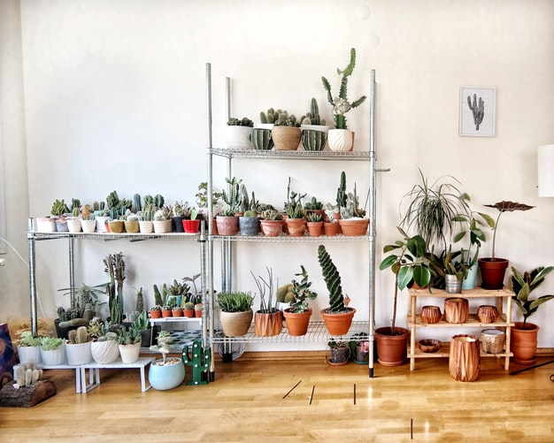 Four Spring Home Decor Trends. Tip 1: add houseplants!
