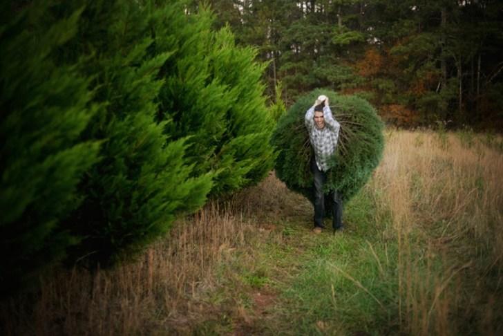 Christmas Tree Cutting (14)