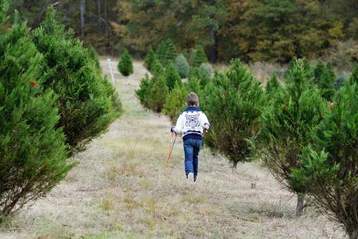 Christmas tree farm fayetteville