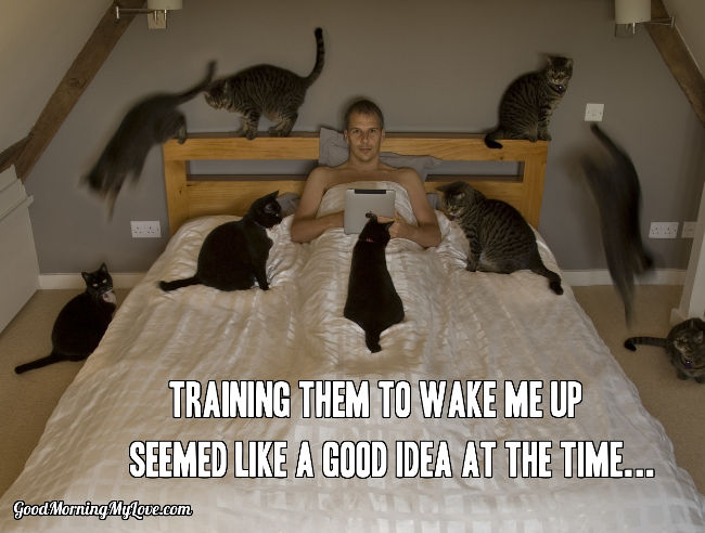 Cats Wake Up Meme