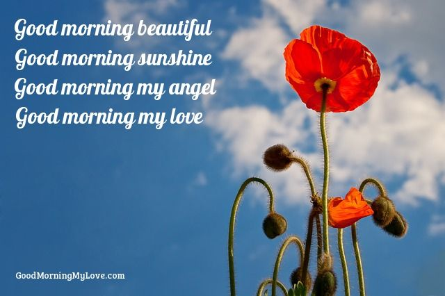 Good Morning My Love Quotes : ... good morning sunshine, good morning my angel, good morning my love