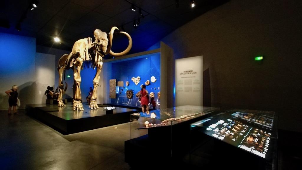 musée des confluences exposition dinosaure