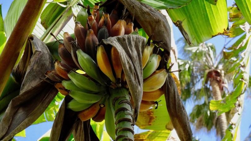 jardin_tropical_visiter_lisbonne_blog_voyage_good_morning_usa_1
