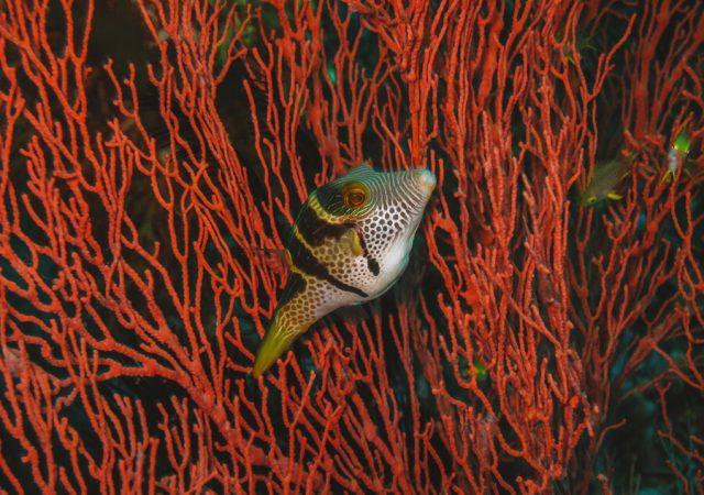 Bali Sightseeing Tulamben duiken snorkelen-3
