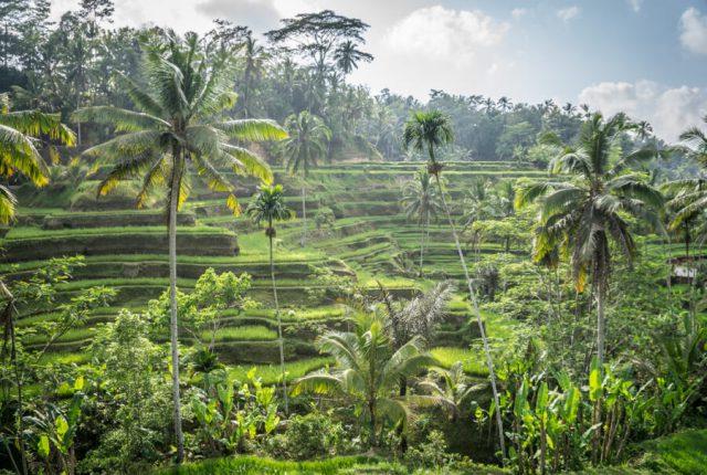 Bali Attracties Ubud Tegallalang rijstterrassen-2