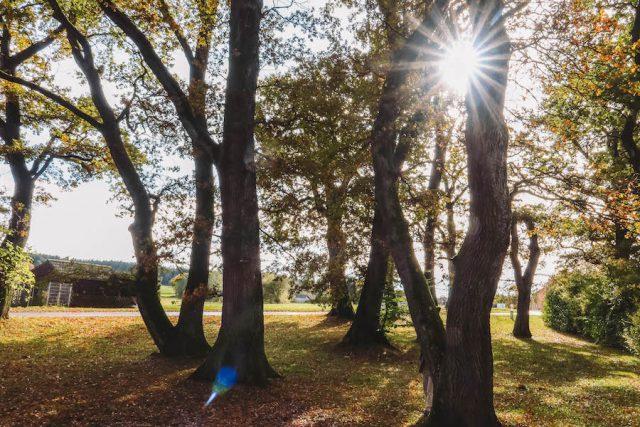 Mindfulness Migration Oaks