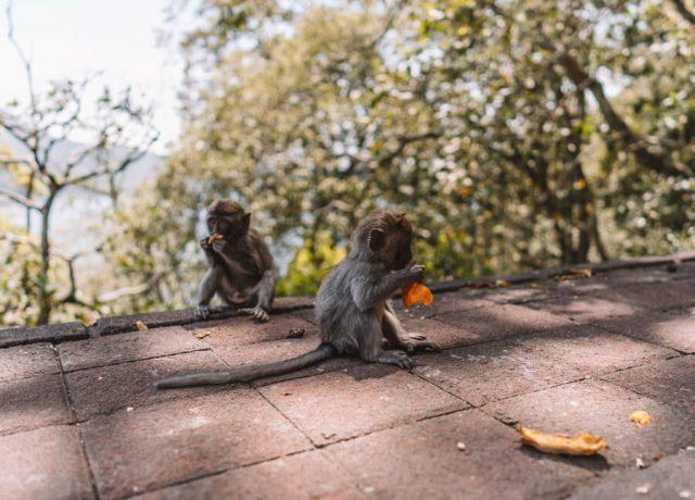 Munduk Bali Monkey Forest Buyan Lake