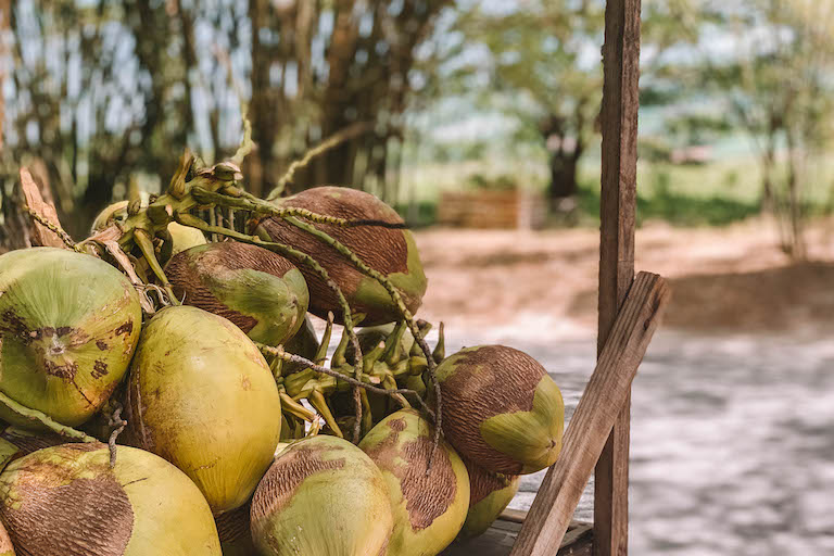 Caribische kokosnoten