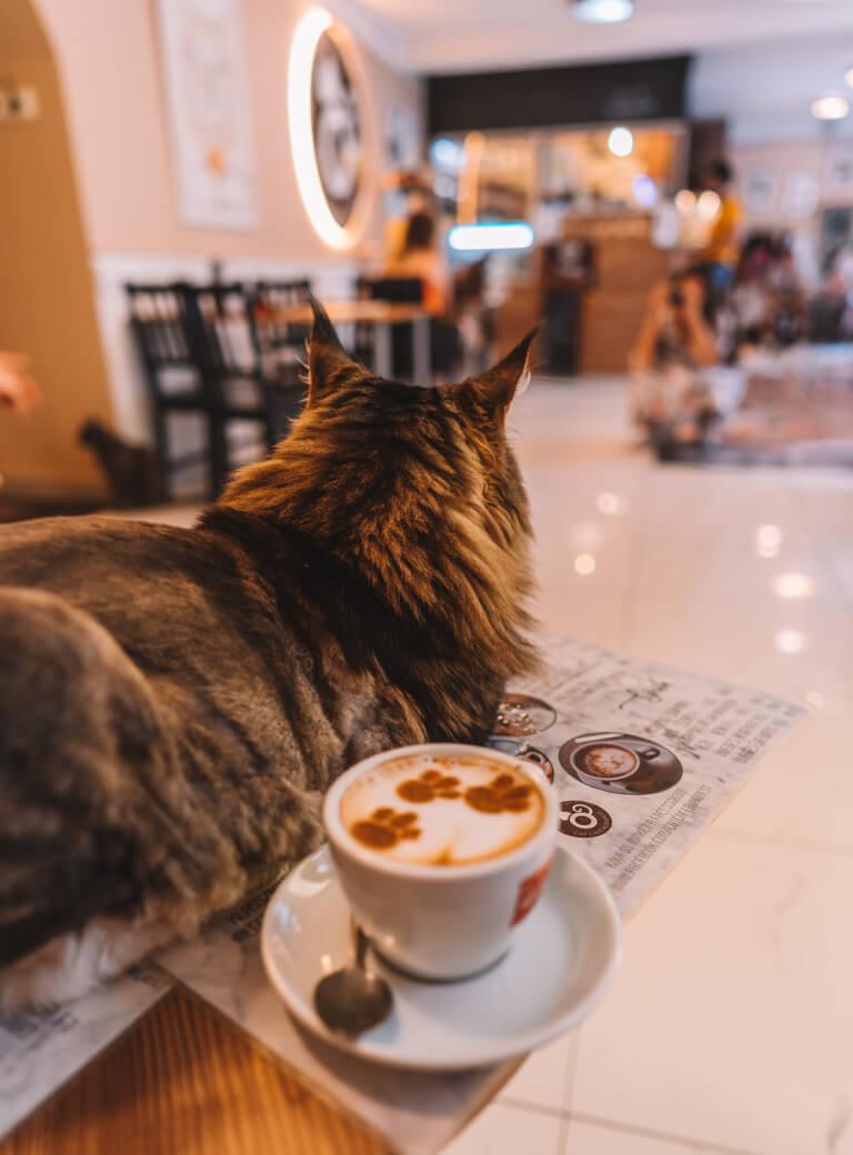Cat Cafe Budapest Cat Cafe