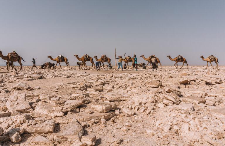 Afar driehoek zoutwinning Danakil Valley