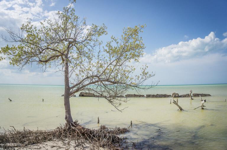 Isla Holbox Mexico Punta Mosquito eb