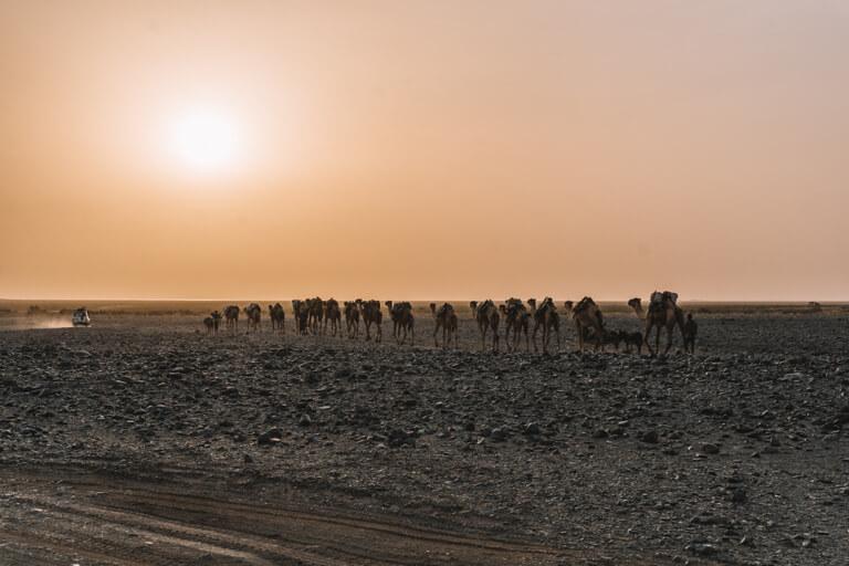 Afar driehoek kameel caravan