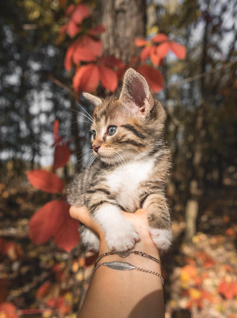 Baby kat herfst