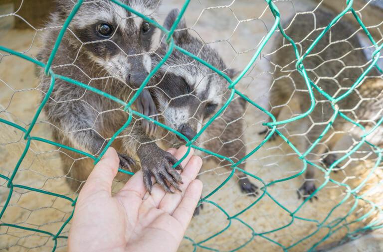 Refugio Holbox Animal Sanctuary Wasberen